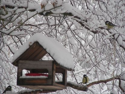 La mort des oiseaux ... dans Poésies, Fables, contes, ... (171) 0c4dy0u1