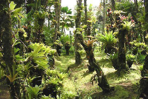Images foret jardin for Jardin foret