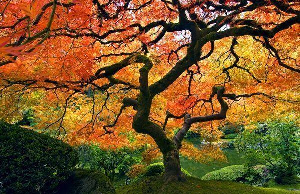 Paysage d' automne arbre couleur rouge